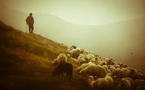 good shepherd1